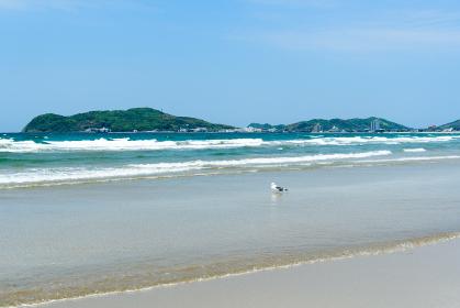 青空と綺麗な砂浜とカモメの遊ぶ海岸 (福岡県,日本)