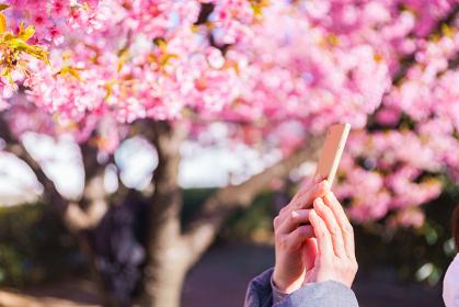 花見 スマホ 撮影 【ウィズコロナのニューノーマル】