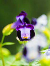 紫色の小さな花ハナウリクサ