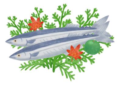 色鉛筆手描き 秋の食材 秋刀魚イラスト