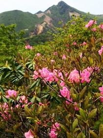 山ツツジ咲く百名山那須岳