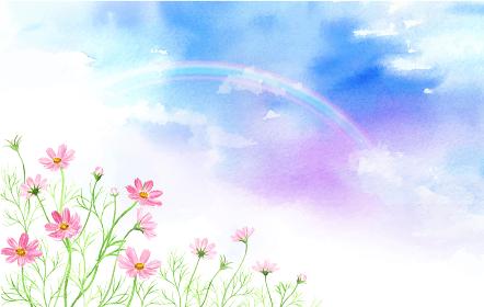 虹とコスモスの風景 水彩イラスト