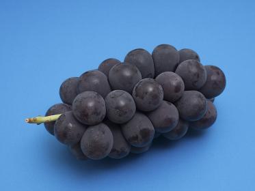 ブドウ フジミノリ