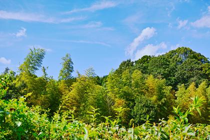 竹林と緑の森と白い雲のある青空