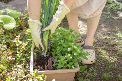 家庭菜園で収穫できた小葱を持つ女性