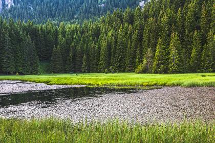 Smolyan Lake - Green pines around a lake
