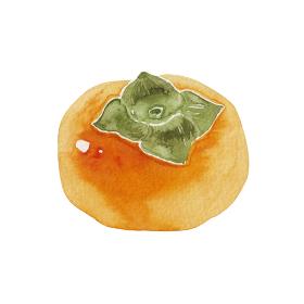 柿 秋 果物 フルーツ 水彩 イラスト