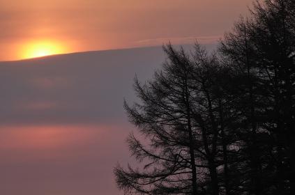 日の出と大きな木々