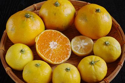 笊に入った蜜柑と柚子と半切りの中身