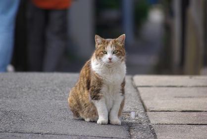 路地に座ってカメラ目線の茶キジトラ白猫