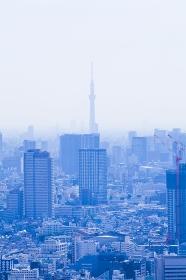 都庁展望台から見た東京スカイツリー