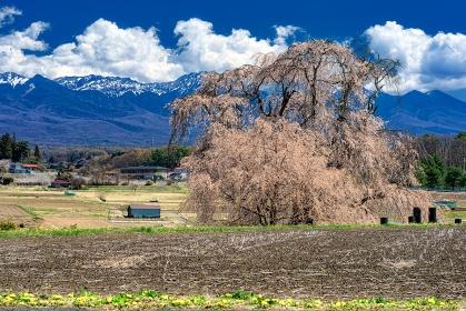 長野県・茅野市 春の下菅沢の祖霊桜と八ヶ岳の風景