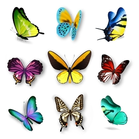Realistic Butterfly Set. Realistic set with various colorful butterflies isolated on white background vector illustration