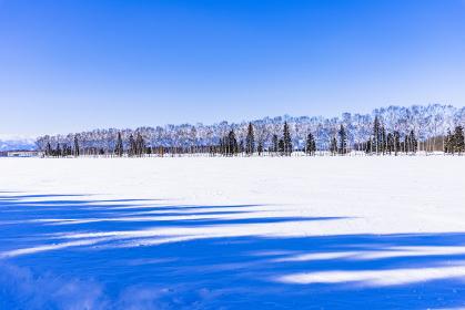北海道 十勝地方 冬景色