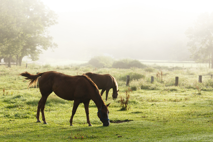 日本の北海道東部・9月の牧場、逆光の朝靄に浮