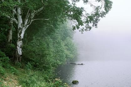 長野県・立科町 初夏の女神湖に漂う朝霧の風景