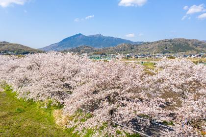 つくば霞ヶ浦りんりんロードの桜並木と筑波山 茨城県 サイクリングロード