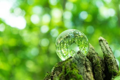 森の中のガラスの地球