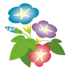夏 朝顔 植物