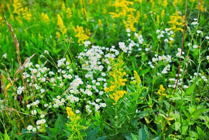 黄色や白い花が咲く草むら