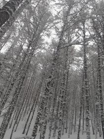 雪の森、北アルプスの中房温泉
