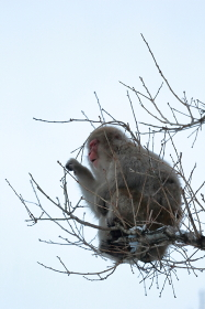 木に登るお猿さん