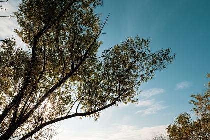 冬の青空と木々
