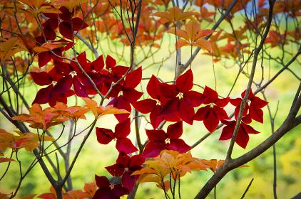 秋のたたずまい