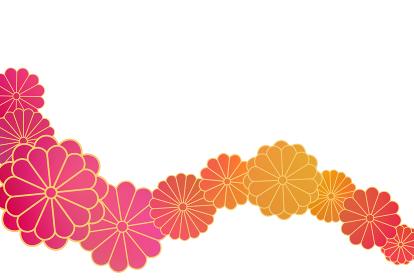 ハガキ 菊帯暖色グラデ イラスト 1