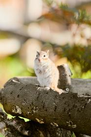 木の上に立っているシマリス
