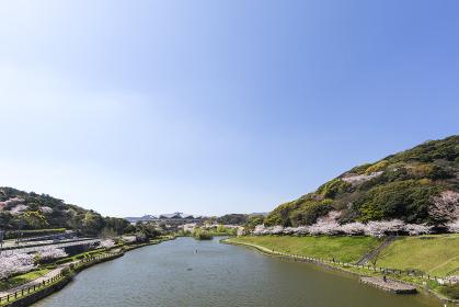 北九州中央公園の桜と北九州市立総合体育館