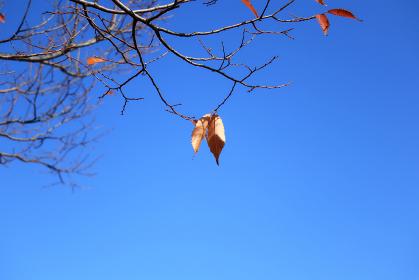 空と木 10 枝先に数枚残る枯れ葉
