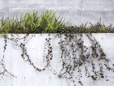 公共施設のコンクリート塀の植栽