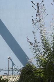 水色の壁面と草木