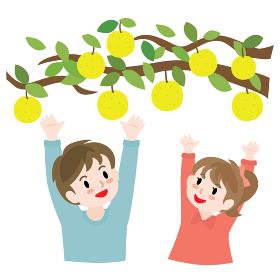 梨狩りをする子供たち