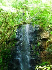 アルゼンチン・ブラジル国境エリアのイグアスの滝にて森林の中を流れる一筋の小さな滝