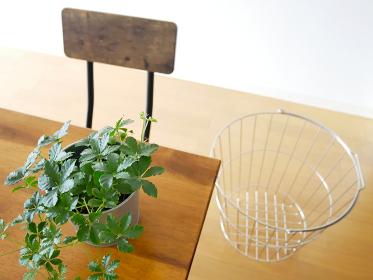 観葉植物と洗濯カゴ