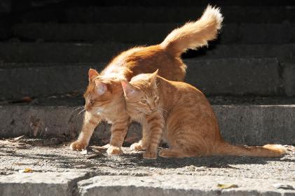 ネコの兄弟 仲良し