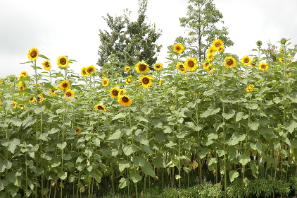 Tottori Prefecture;Flower Gallery;Flowers