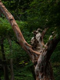 森の中の荒々しい幹を持つ木