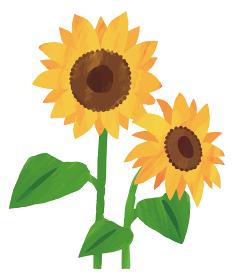 ひまわり 向日葵 イラスト 素材 水彩