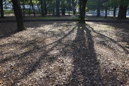 冬の朝低い太陽が影を走らせる公園の木々