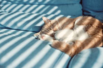 光射す場所 / 昼寝をする猫
