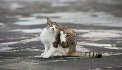 耳を掻く子猫