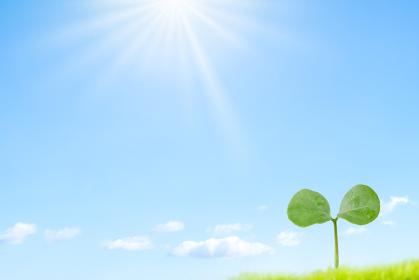 太陽光と新芽と青空の背景
