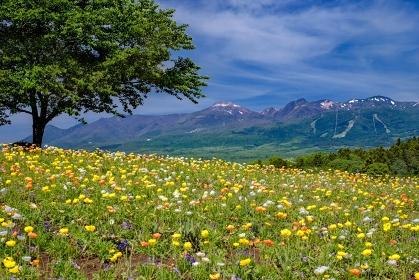 栃木県・春の那須高原の花畑の風景