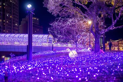 冬の小倉イルミネーション夜景