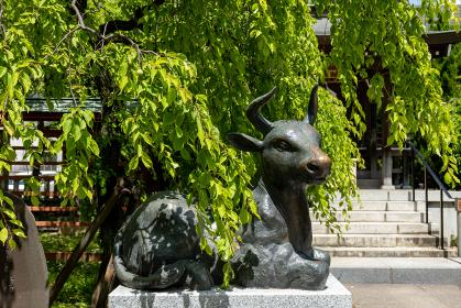 初夏の埼玉県川口市の川口神社にある天満宮の臥牛