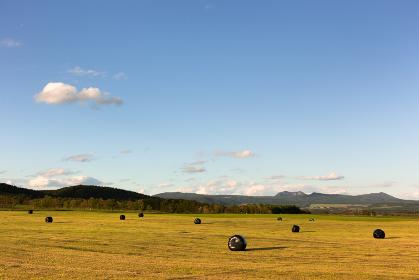 日本・北海道東部の弟子屈町、夕方の牧草地