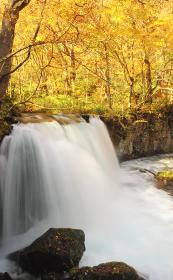 秋の奥入瀬渓流 銚子大滝